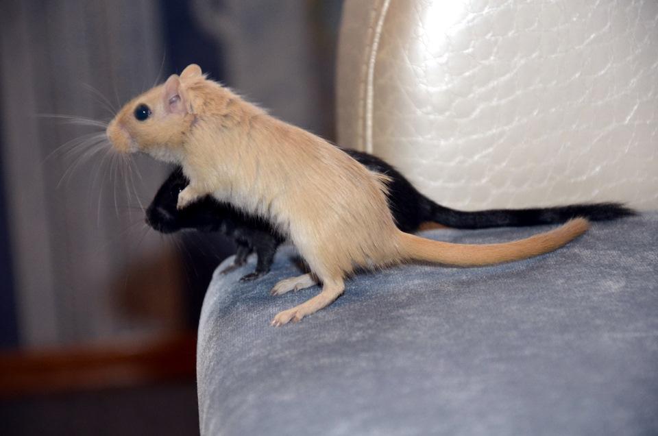 Сколько живет мышь и разновидности мышей с фото - Zverki.Click