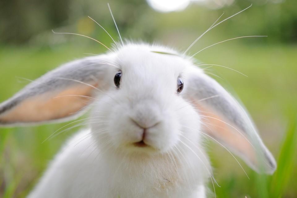 Как назвать кролика девочку и мальчика — лучшие имена