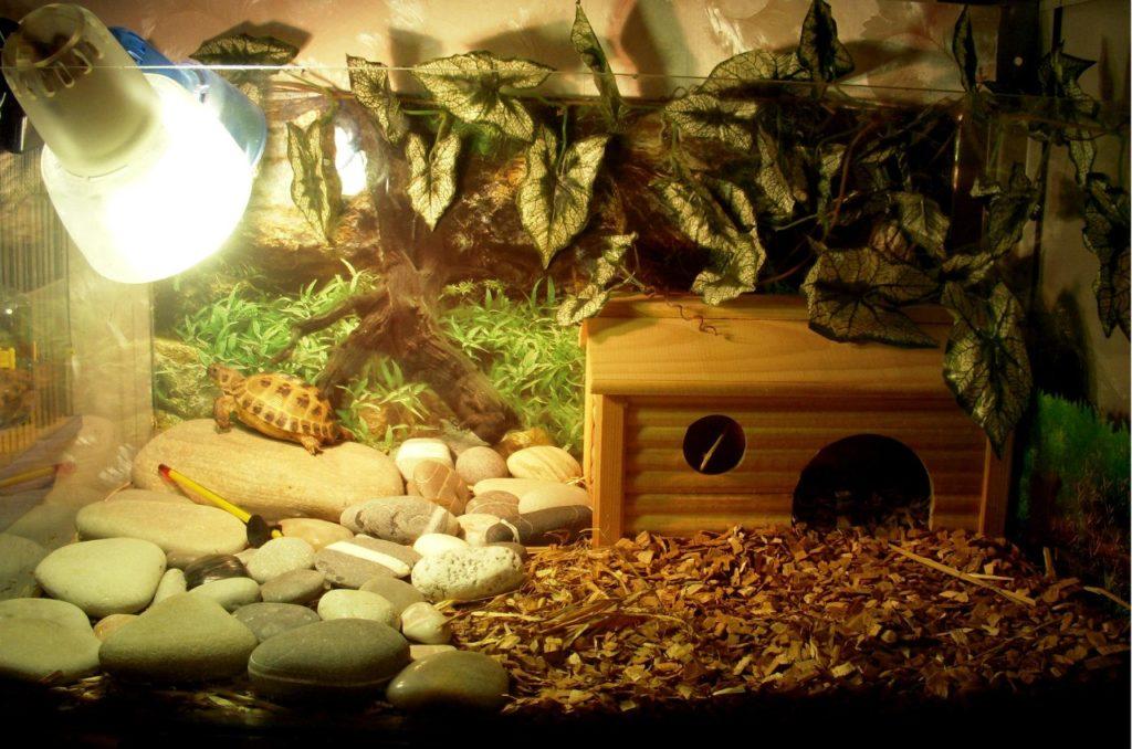 Красивый террариум для черепахи