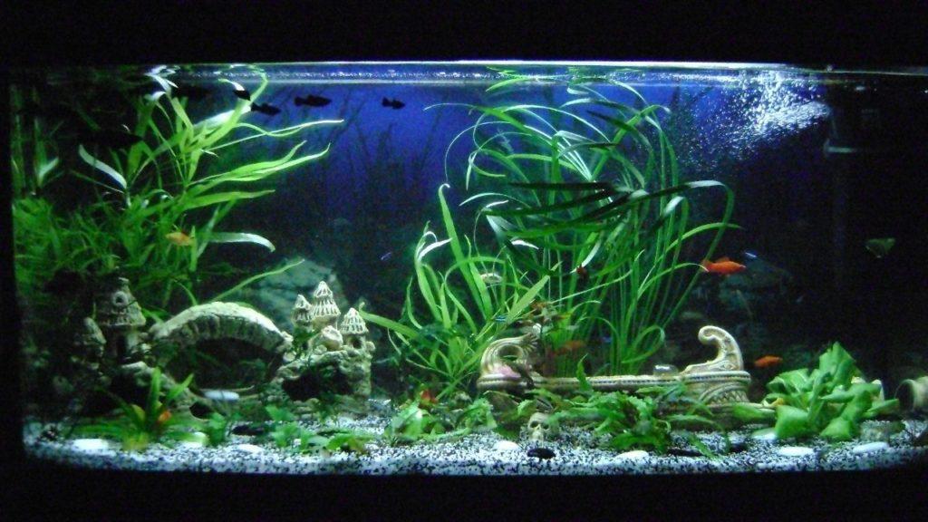 Зелёные водоросли в аквариуме