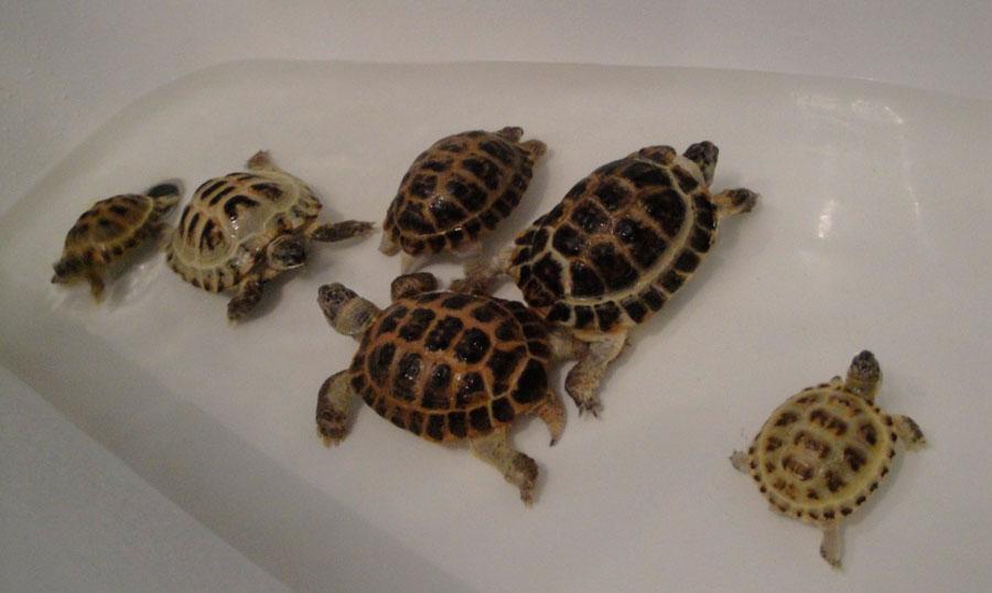 Купание черепах