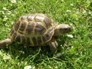 Что едят черепахи в домашних условиях: рекомендации и советы