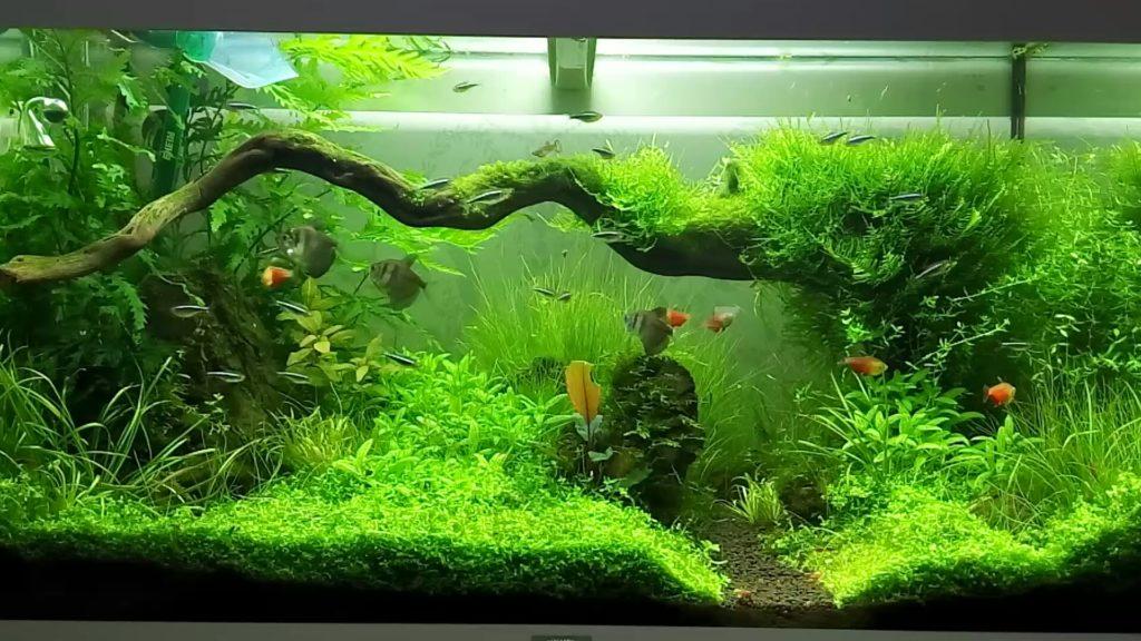 Зелёный аквариум с рыбками
