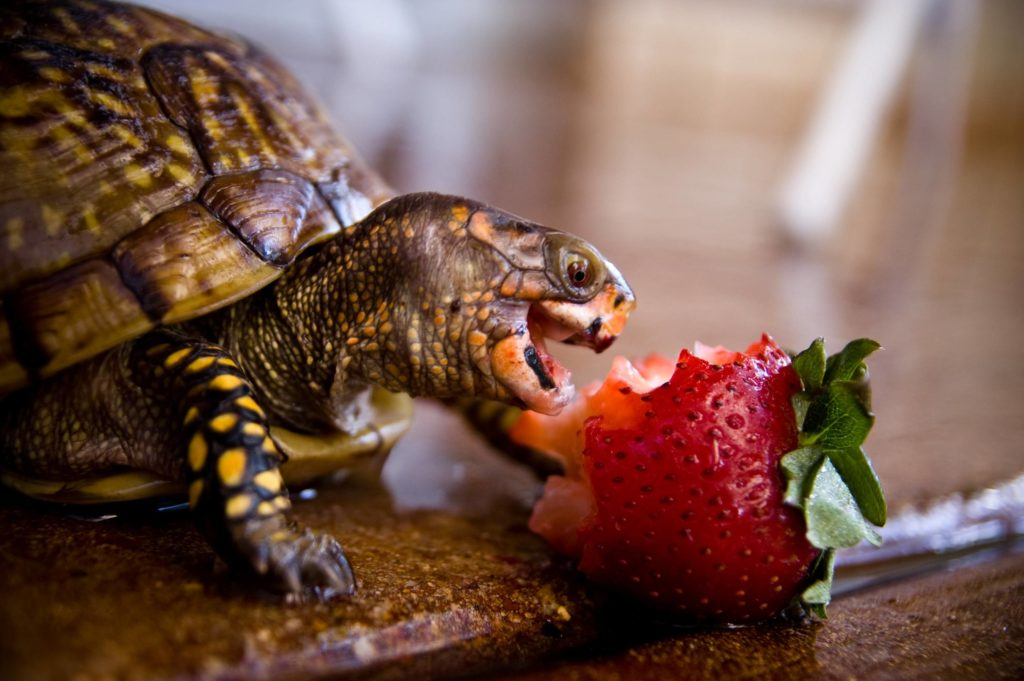 Поедание клубнички