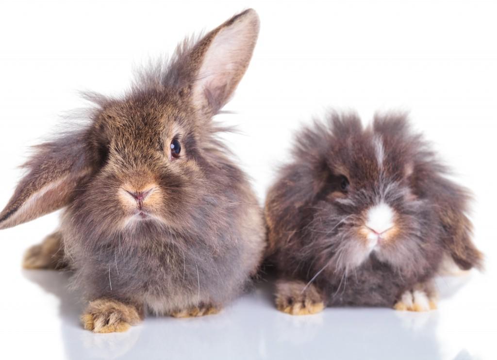 Сколько длится беременность у кроликов и как они рождаются