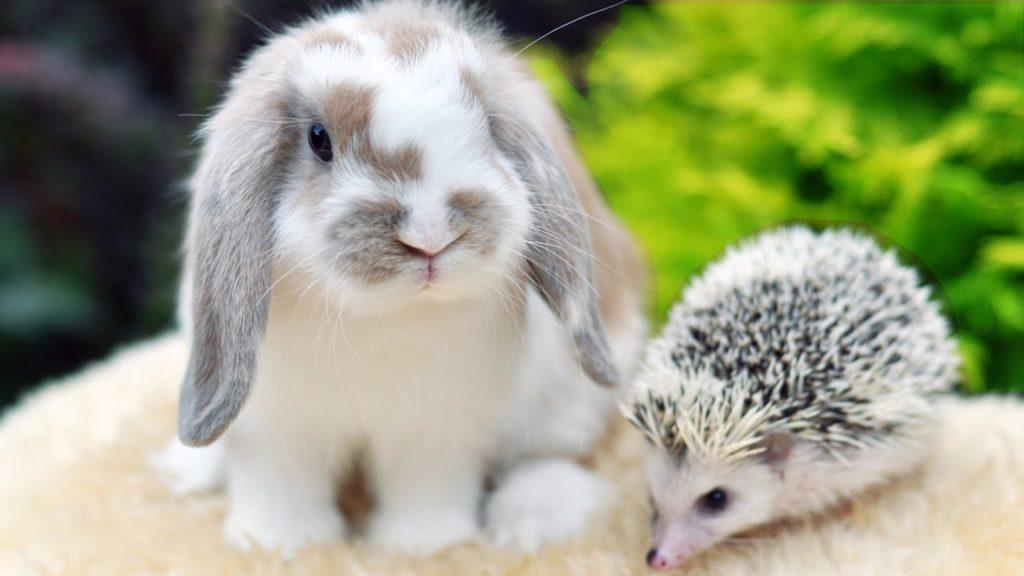 Про кроликов уход за ними