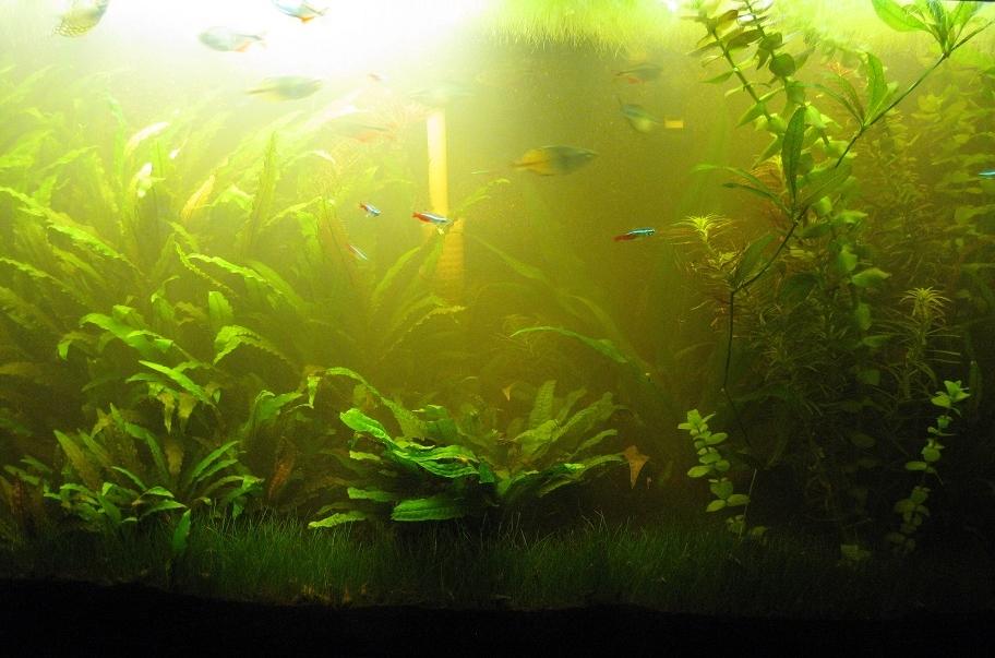 Почему зеленеет вода в аквариуме что делать