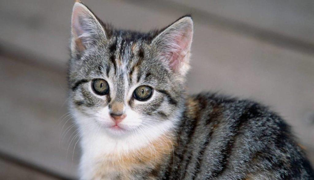 У кота горячие уши причины и стоит ли беспокоиться