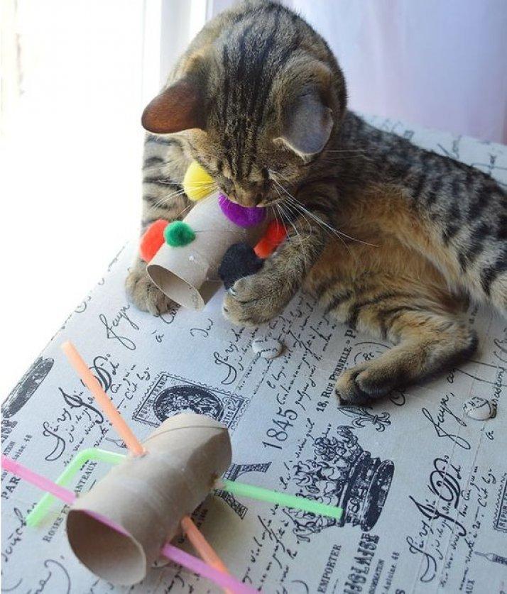 Игрушка для кота из доступных материалов