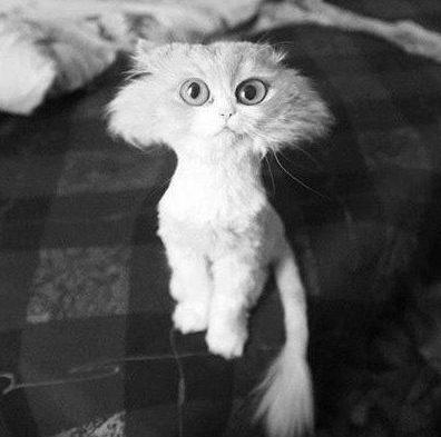 Как подстричь шерсть коту в домашних условиях
