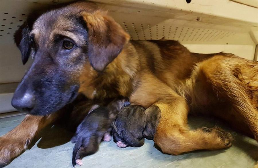 Родившая собака