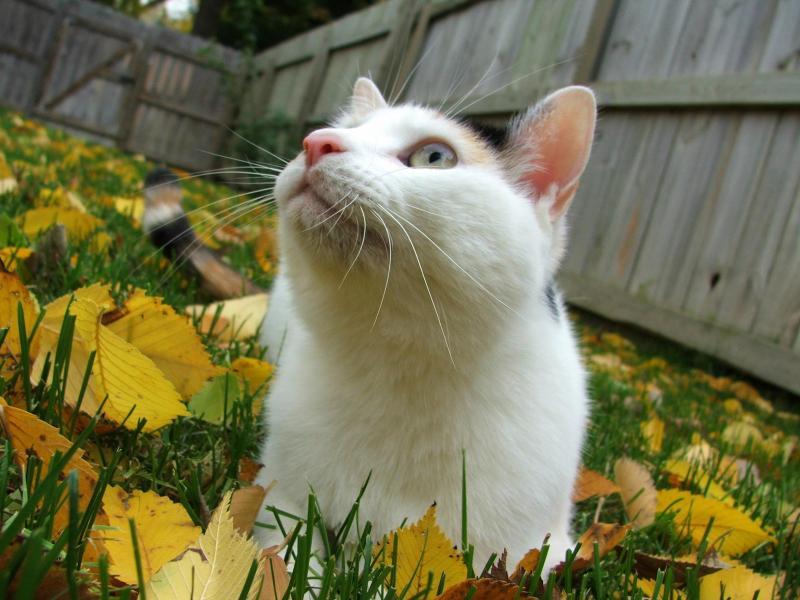 Акне на подбородке у кота
