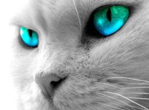 Как видят кошки людей