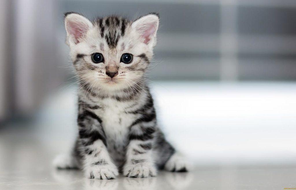 Как определить возраст котнка в домашних условиях