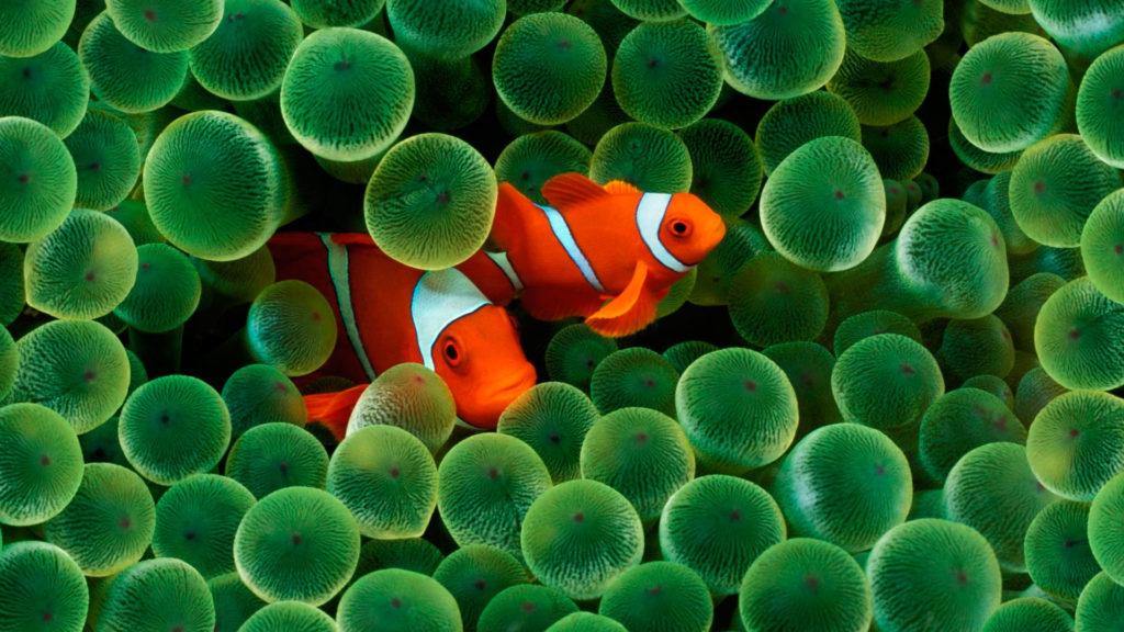 Огненно-оранжевый клоун