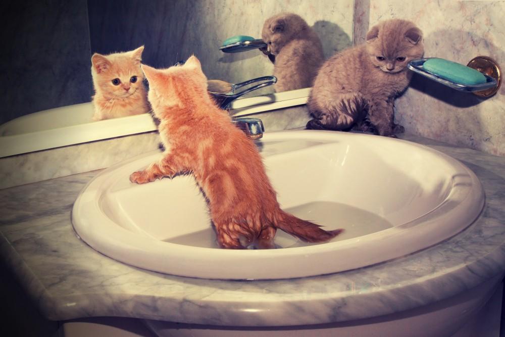 Купание котёнка в раковине