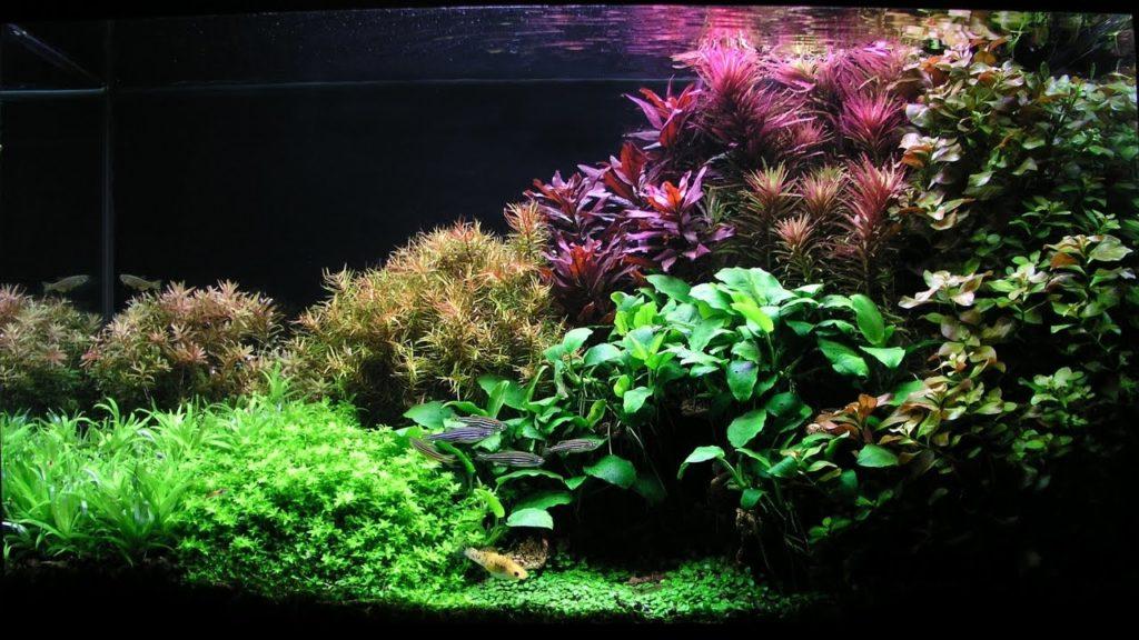 Ночной аквариум