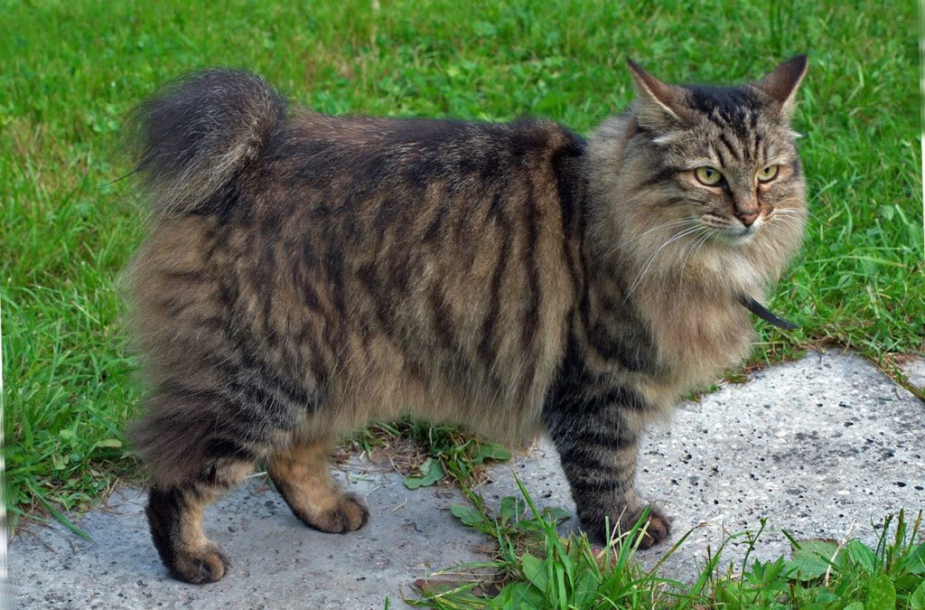 """Кот с хвостом """"Пенёк"""""""