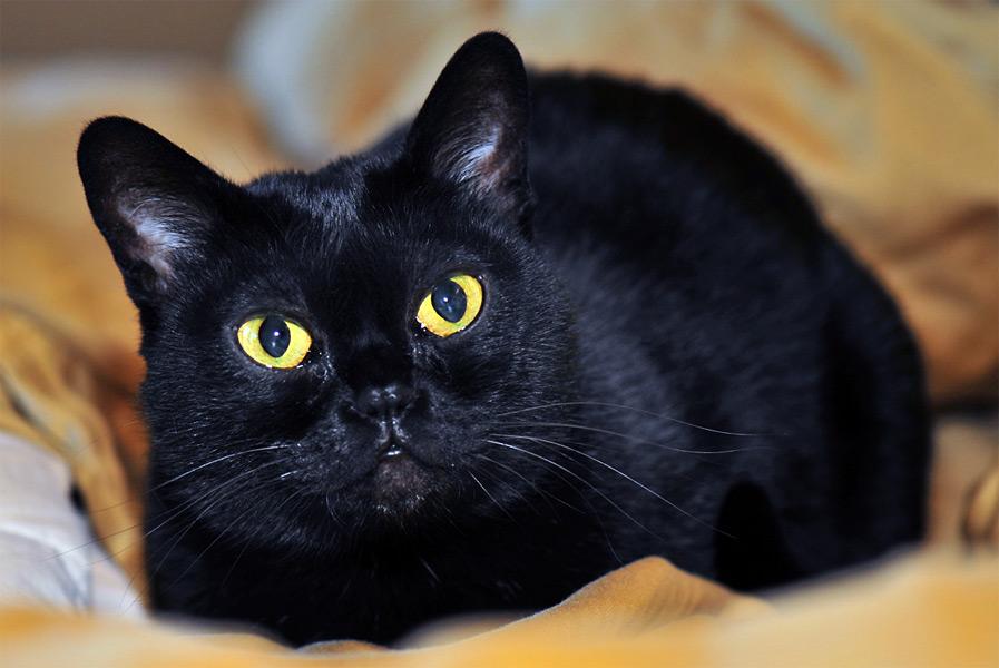 Кошка, похожая на пантеру
