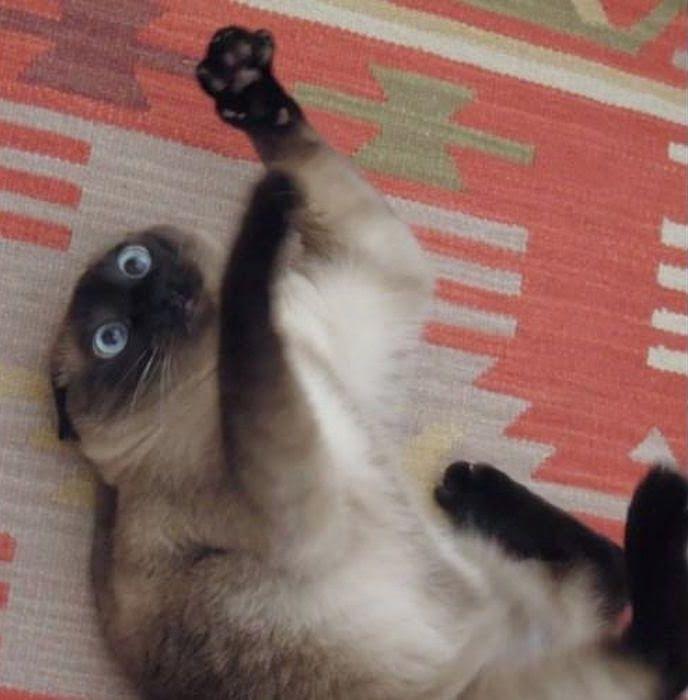 Кот под валерьянкой