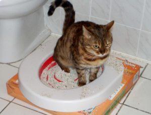 Кота рвет глистами. Лечение глистной инвазии у кота при рвоте с гельминтами