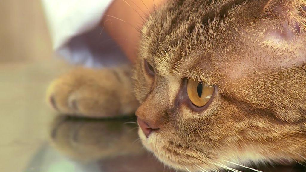 Больная кошка