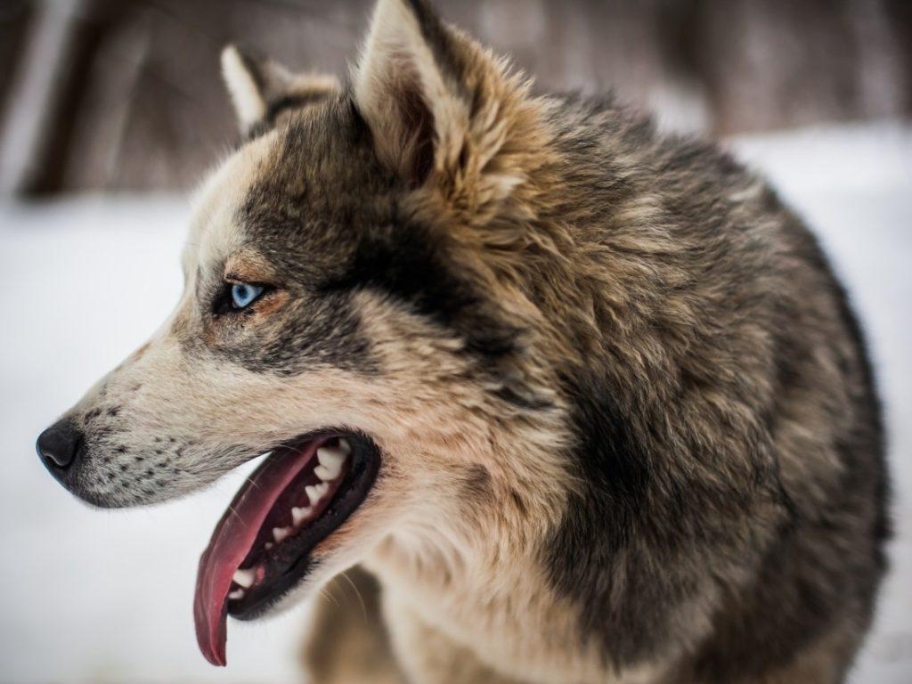 Кожные болезни собак — описание, лечение, диагностика