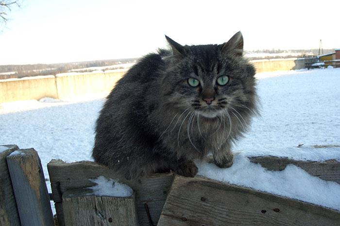Бешенство у кошек: симптомы и признаки, а также опасность для человека