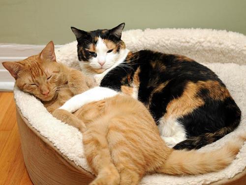 Аллергия у кошек: симптомы и лечение, а также фото