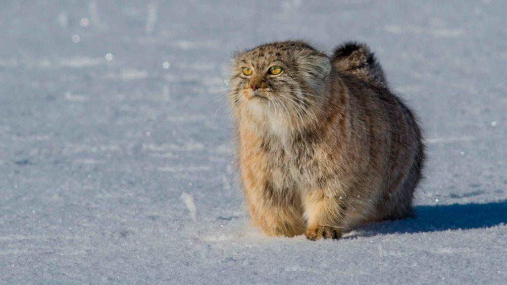 Кот с сильными и крепкими лапами