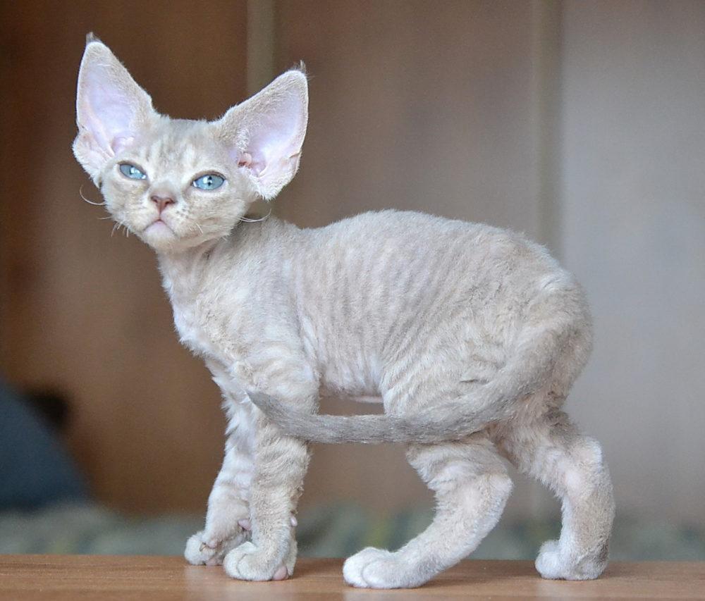 Необычный котёнок