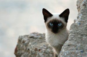 Опасны ли блохи кошки для человека и методы борьбы с ними