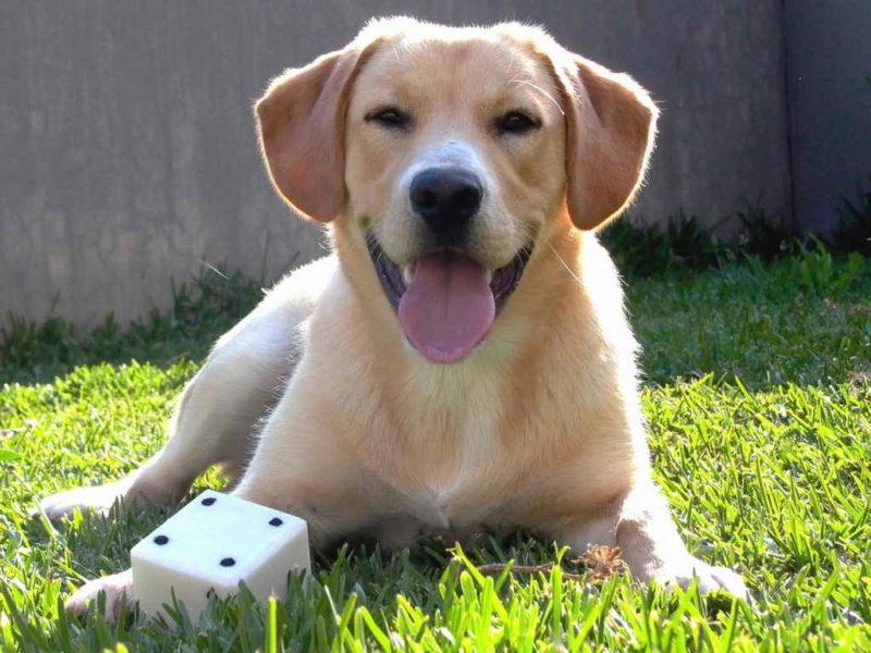 Собака большой породы