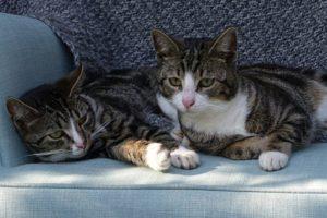 Причины мочекаменной болезни у котов и методы лечения
