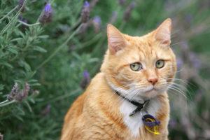 Чем лечить кошачий лишай у ребенка