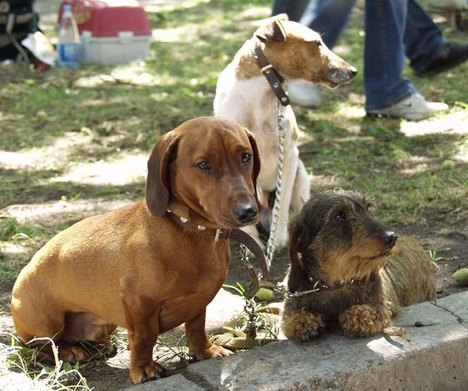 Таблетки от глистов для собак: список лучших, отличия, применение