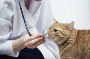 Как правильно ухаживать за кошкой после стерилизации