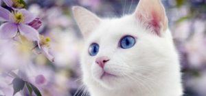Как рожают кошки, признаки родов и сколько они длятся