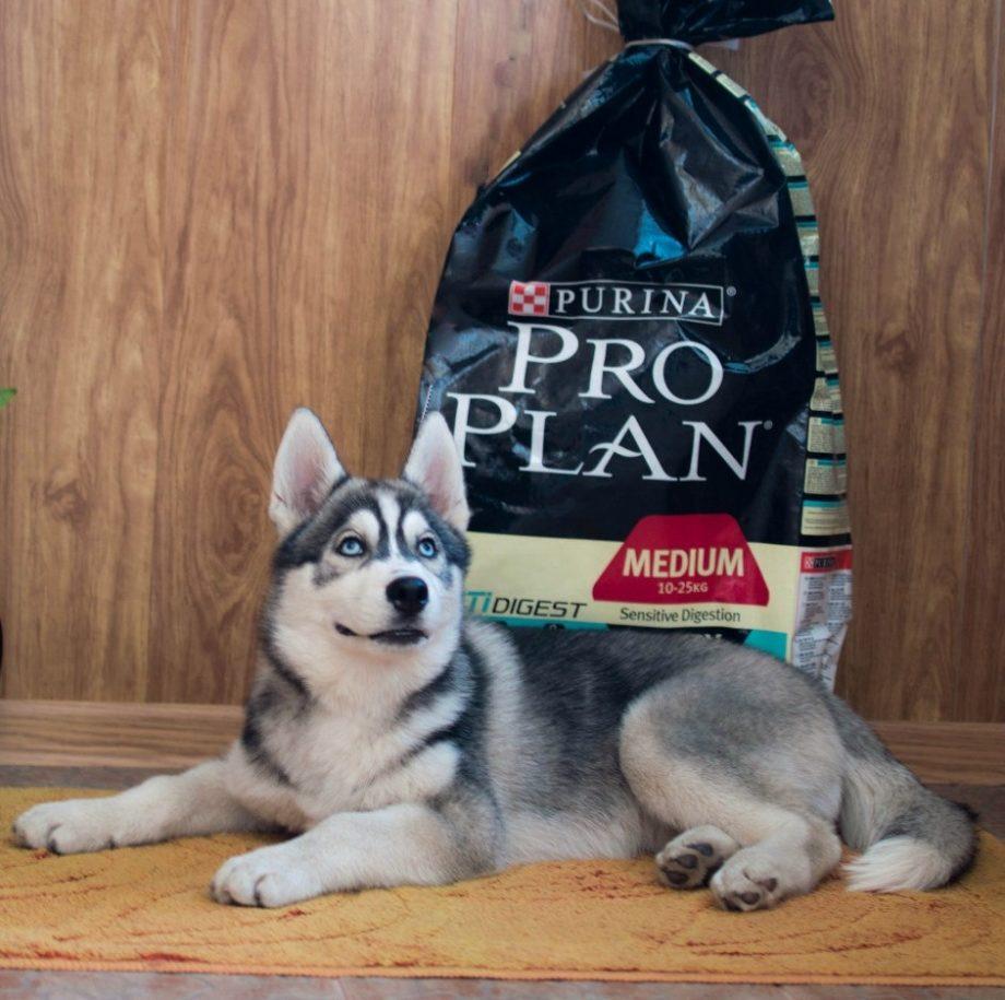 Проплан для собак средних пород