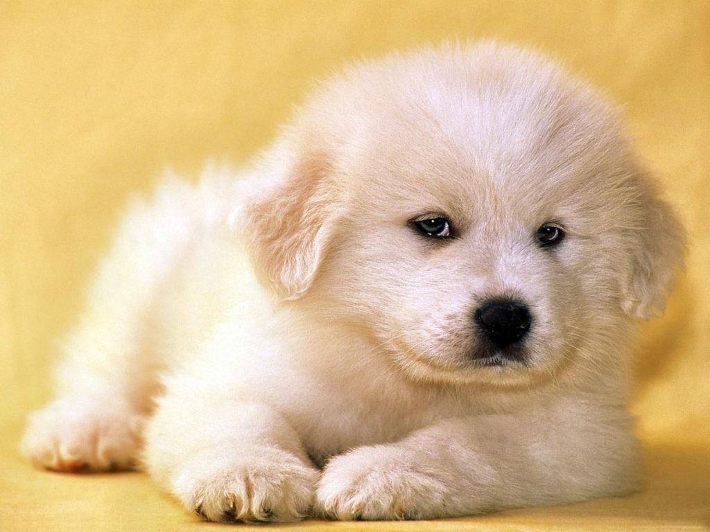 Картинки маленького щенка