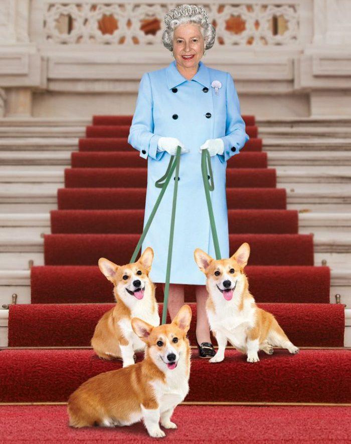 Любимые собаки королевы Англии