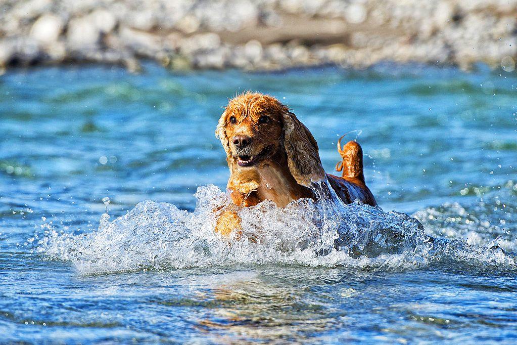 - Пойдем купаться...