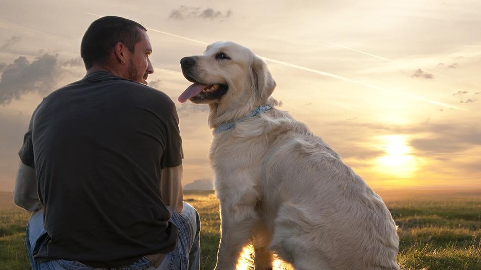 Собака трясет ушами и чешет их лечение
