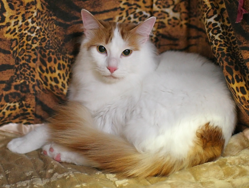 Кормим правильно стерилизованную кошку в домашних условиях чем должен отличаться корм какой лучше