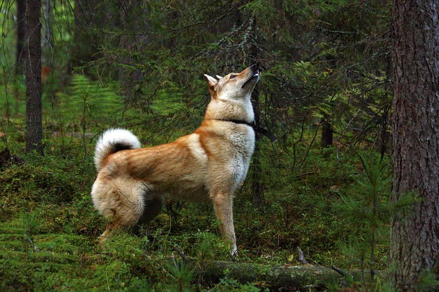 Охотник