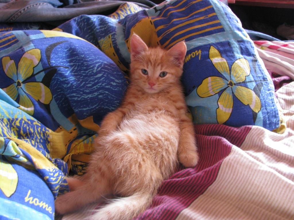 Небольшой котёнок