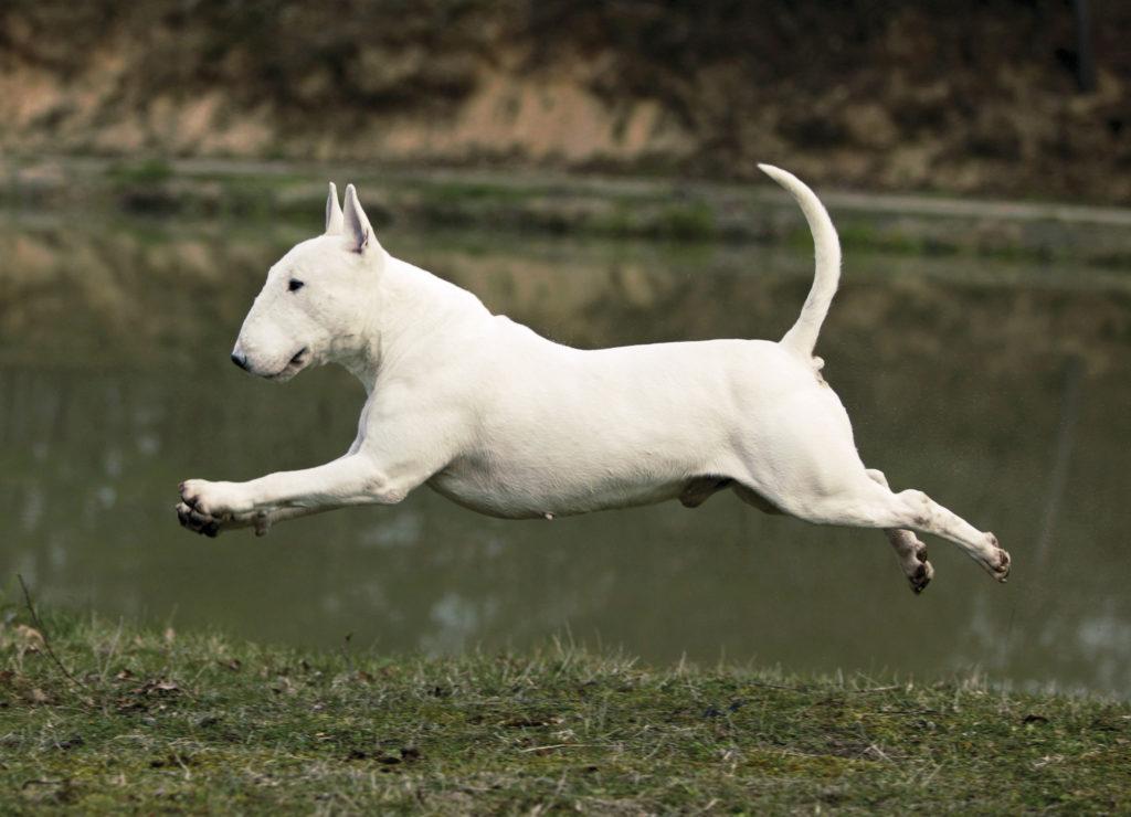 Активный пёс