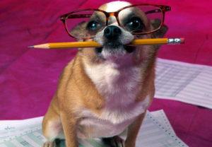 ТОП-10 самых умных собак в мире