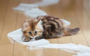 Советы специалиста: как отучить кота или котёнка писать и гадить в неположенном месте