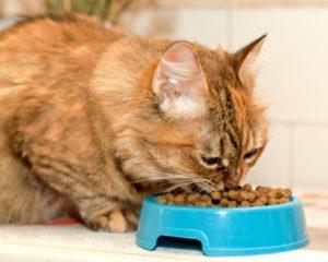 Ветеринария кошки почечно-каменная болезнь диета